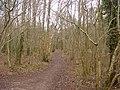 Path in Gait Barrows Reserve - geograph.org.uk - 126506.jpg