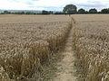 Path to Risley Lodge Farm - geograph.org.uk - 1458577.jpg