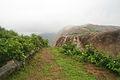 Pathway at Gurubhaktulakonda Buddhist Monastic ruins.jpg