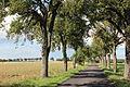 Pear tree alley Mondorf Burmerange 2013-08.JPG