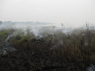 Southeast Asian haze - A peat fire near the Raja Musa Forest Reserve in Selangor, Malaysia (2013). The fires are below the surface, where the peat is smoldering.