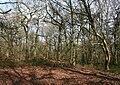 Peckforton Woods wiki.jpg