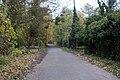 Perthes-en-Gatinais - Bois du Petit-Moulin - 2012-11-14 - IMG 8183.jpg