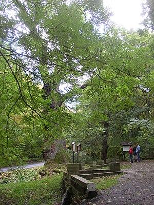 Božena (Křesinová) - Oldřich Oak in Peruc, where Oldřich and Božena probably met.