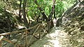 Petaloudes - path along the valley - panoramio.jpg