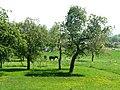 Pferd auf der Koppel mit Sommerwiese - panoramio.jpg