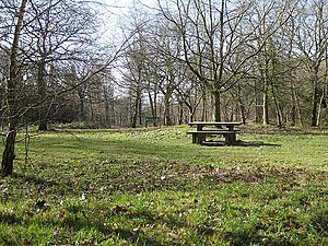 English: Picnic area, Haugh Wood The springlik...