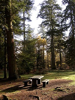 Picnic area at Blackwater car park, New Forest - geograph.org.uk - 87027