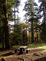 Picnic area at Blackwater car park, New Forest - geograph.org.uk - 87027.jpg