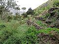 Pico da Antonia-Polyculture en terrasses (2).jpg