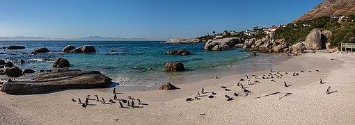 Pingüinos de El Cabo (Spheniscus demersus), Playa de Boulders, Simon's Town, Sudáfrica, 2018-07-23 PAN 29-31.jpg