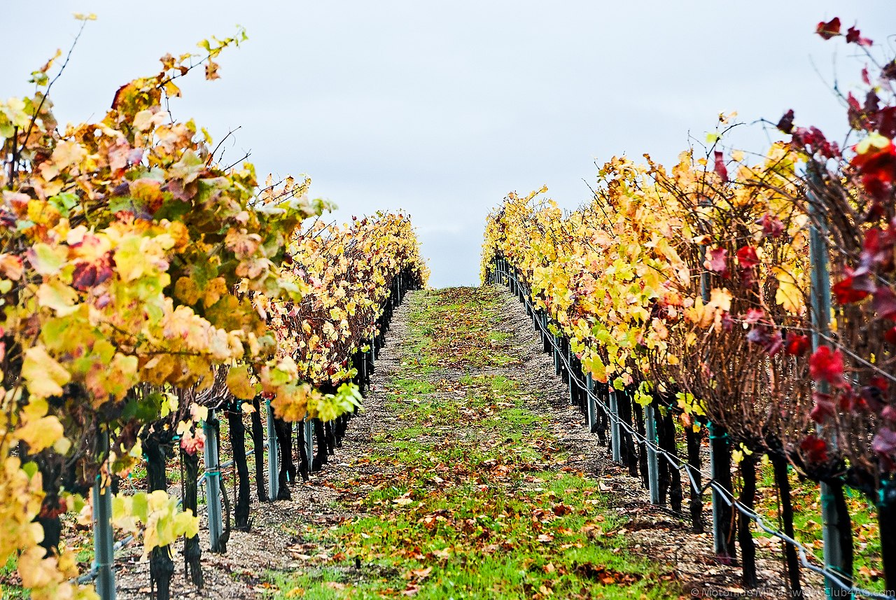 Santa maria california dating