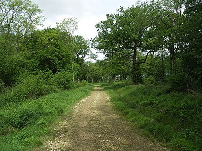 How to get to Pipewell Wood with public transport- About the place
