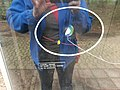 Planetenpad Westerbork (42).jpg