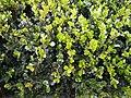 Plants -56.jpg