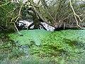 Pond, Coxhill Farm, Purton Stoke - geograph.org.uk - 1240190.jpg