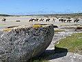 Pony-trekkers - geograph.org.uk - 1464188.jpg