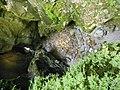 Pradis green cave.jpg