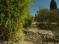 Praha, Troja, Botanická zahrada, bambus.JPG