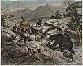 President Roosevelt Bear Hunting, The Bear At Bay (15075483168).jpg