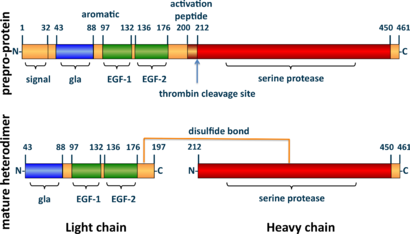 A tube diagram representing the linear amino acid sequence of the preproprotein C (461 amino acids long) and mature heterodimer (light + heavy chains) highlighting the locations of the signal (1-32), gla (43-88), EGF-1 (97-132), EGF-2 (136-176), activation peptide (200-211), and serine protease (212-450) domains. The light (43-197) and heavy (212-461) chains of the heterodimer are joined by a line representing a disulfide bond between cysteine residues 183 and 319.