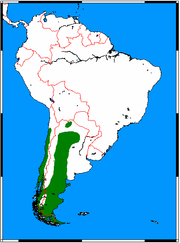 Distribution of the South American gray fox