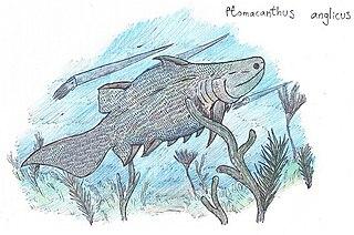 <i>Ptomacanthus</i> Extinct genus of cartilaginous fishes
