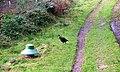 Public Bridleway, Thorodale Woods - geograph.org.uk - 260155.jpg