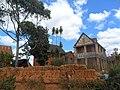 Quelques vestiges de Hasina poussant à Fonohasina.JPG