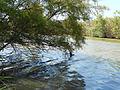 Río Gudalhorce 07 - rozando el agua.JPG