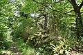 RNR Bois des Roches-1 (36).jpg