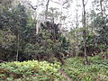 Rainforest at the start of the Kalianna Ridge Track, Budawang National Park 020.jpg