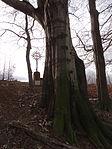 Raspenava - památný Sluneční buk na úpatí Pekelského vrchu (6).JPG