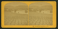 Red Hill, from Centre Harbor, N.H, from Robert N. Dennis collection of stereoscopic views.png