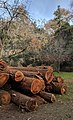 Redwood Grove logs to mill.jpg