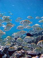 Reef0937 - Flickr - NOAA Photo Library.jpg