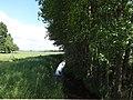 Rehfelde Lichtenower Mühlenfließ nördliche Richtung.JPG