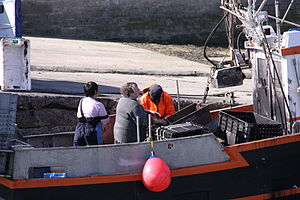 Retour de la pêche à la seiche du fileyeur Jason IV (48).JPG