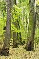 Rezerwat przyrody Morysin, park 8.jpg