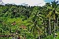 Rice Fields in Ubud Indonesia Bali - panoramio (19).jpg