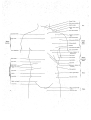 Richer - Anatomie artistique, 2 p. 84.png