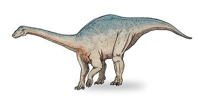 Riojasaurus sketch3.jpg