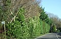 Roadside and high hedge in Lyons Gate - geograph.org.uk - 316393.jpg