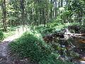 Robert Simpson Nature Trail 05.JPG