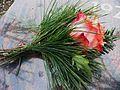 Rosengruß Grabplatte 2011.JPG