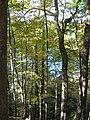 Round Lake - Fayetteville NY.jpg