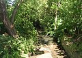 Roundwood Beck - Albany Road, Kirkheaton - geograph.org.uk - 889765.jpg