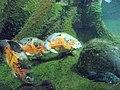 Ryby v ZOO (7).jpg
