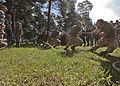 Saber Strike 2012 120616-M-GZ082-002.jpg