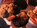 Saint-Paul-les-Trois-Châteaux truffes noires.JPG